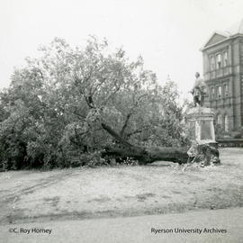 Downed tree in front of Ryerson Hall (Normal School)